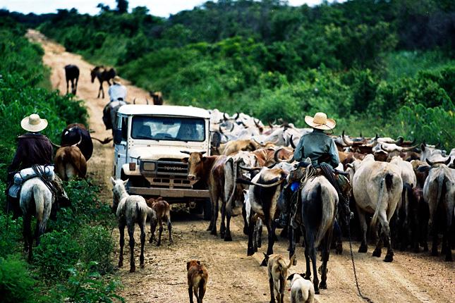 Expedição Pantanal